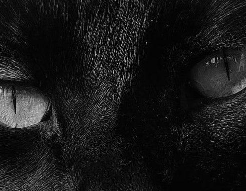 Black Cat Writing